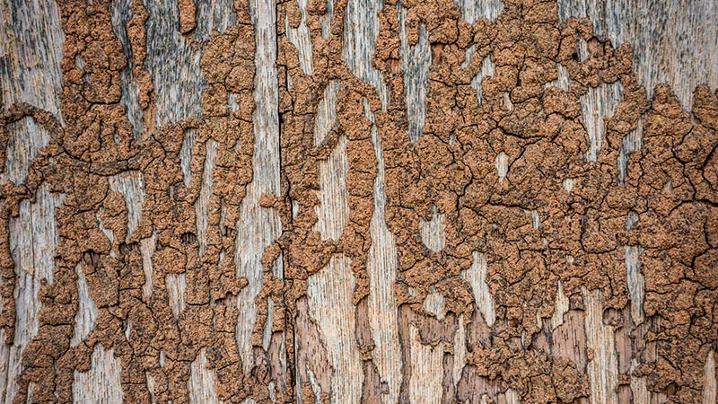 termite damaged wood discovered while preforming home inspection services
